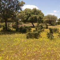 Flora y vegetación autóctona