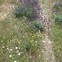 Flora autóctona