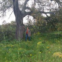 Alcornoque gigante