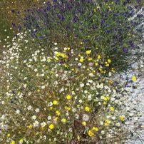 Flora del lugar