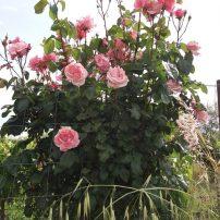 Flora de la zona