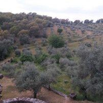 Vista desde un cuarto, a la parte de olivar ecológico