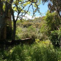Vegetación y frondosidad endémica, vista desde cualquier punto